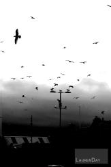 birdsSign