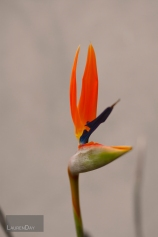flower1sign