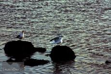 gulls1sign